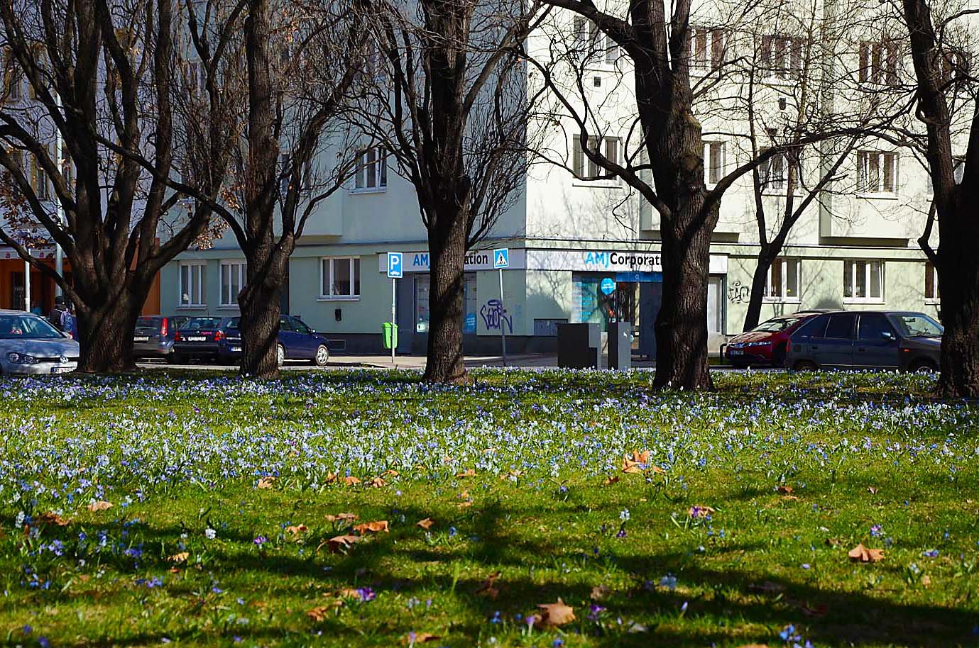 Spring in Blue Colours in Prague Park