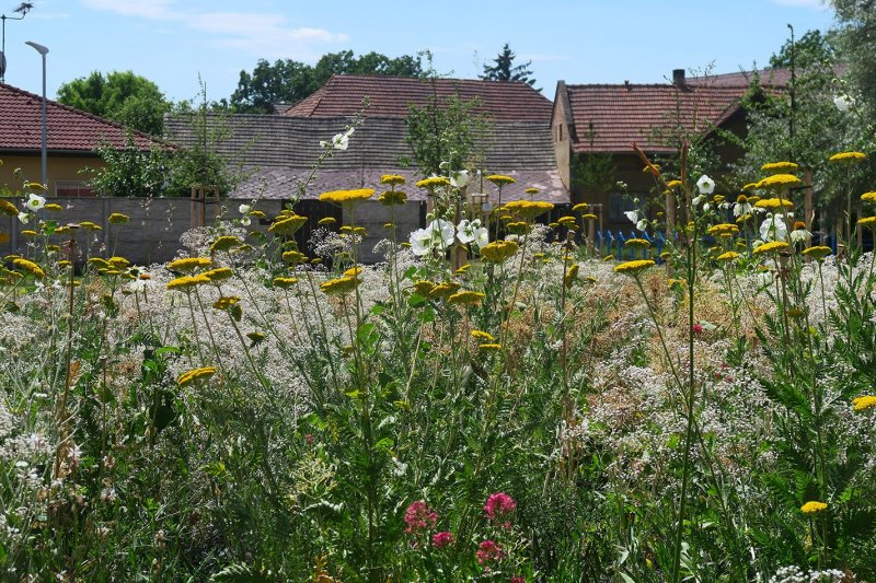 Perennial flower beds in Melnicke Vtelno village